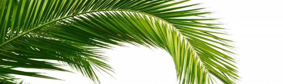 We offer palm waxes